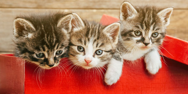small spaces, for cats, mimic the feeling of snuggling with their mom and litter mates. Photo / 123RF