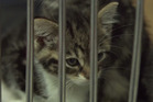 Animal welfare complaints to the Auckland SPCA in Mangere rose by 9 per cent last year.