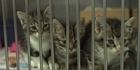 Watch: Watch NZH Focus:Animal Welfare Complaints on the Rise