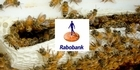Watch: Rabobank Best of The Country - 29th April 2017