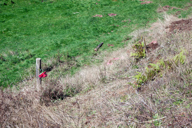 A rose marks the scene of the fatal car crash on Mountain Rd, Oropi, two years ago. Photo/file