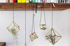 Display your airplants in these cool easy-make geometric hangers. Photo / Supplied