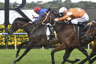 DEJA VU: Polarisation wins the Sydney Cup for the second time in a fortnight, pushed hard to the line last Saturday by Who Shot Thebarman.