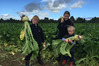 The Galloway children of Takapau among the fodder beet crop on their family dairy farm. Photo / Supplied