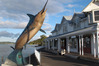 A giant marlin has landed on Paihia's foreshore.
