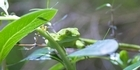 Watch: Zoo Tales: New Zealand geckos
