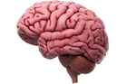 Some experts are sceptical that a brain can be thawed without damage. Photo / Supplied