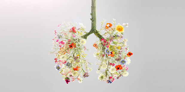 There are a number of effective plant medicines available which help to protect and strengthen your lungs. Photo / Getty Images