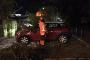 Photos showed the crimson red car, almost buried by the leafy branch that appeared to have fallen right on top of it. Photo / Supplied