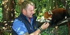 Watch: Watch: In search of Red Pandas