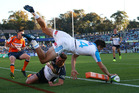 Matt Duffie was unlucky to be denied a spectacular try for the Blues. Photo / Getty