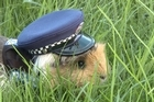 Elliot the guinea pig has gone viral online after being 'recruited' by Wellington Police.