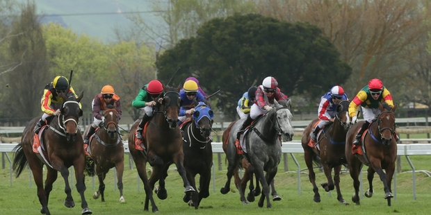 Ringo (left) contests the Great Easter Stakes at Riccarton tomorrow. Photo / NZ Racing Desk