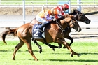Griffin (2) paid $17.10 for his win at Matamata yesterday. Photo / NZ Racing Desk