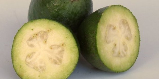 Our feijoas are under threat.
