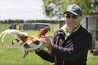Trailer for the upcoming Kiwi documentary film ' Pecking Order '