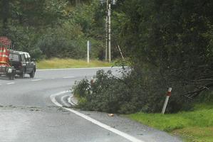 Tree down on Tarawera Rd.  Photo/Stephen Parker