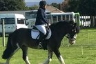 Waipukurau rider Carly Gray on Riverview Captain Tobias, a full Clydesdale stallion, who took first place in the levels 1A and 1C tests at day one of the autumn dressage series at the Dannevirke Showgrounds.