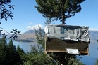 A sly tree hut, constructed in a wilding pine at Arawata Terrace, in Queenstown, pictured last month. Photo / Paul Taylor