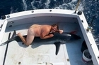 The mystery surrounding the naked man pictured straddling a dead shark has deepened.