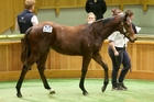 Dan Myers sold Lot 217, a Holy Roman Emperor colt, for $175,000. Photo / Trish Dunell