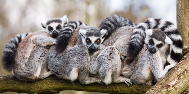 Madagascar is home to more than 250,000 endemic animal species. Photo / 123RF