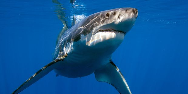 Air China has become the first airline in mainland China to ban shark fin cargo.