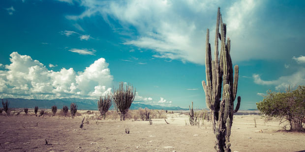 Colombia's Tatacoa Desert. Photo / 123RF
