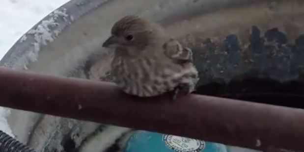 Loading The sparrow was found stuck to a metal pole on a farm in Idaho. Photo / YouTube