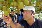 CROP: Kiwi Produce Limited' Saroj Kumar Roy, left, and Vinod Siwakoti said orchards were quite dry at the moment. PHOTO/GEORGE NOVAK