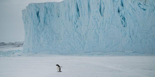 Penguin at Barne Glacier. Photo / Damian Christie