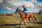 David Walsh is one of New Zealand's most experienced jockeys. Photo / Glenn Taylor
