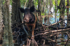 Wild boars can be damaging no matter where they are encountered. Photo / AP file