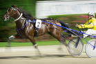 Marcoola (2) ridden by Clint Ford during Race 6 the Breckon Farms Northern Trotting Derby. Photo / Greg Bowker