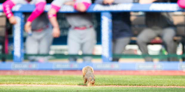 Loading A squirrel makes its way onto the field to disrupt play during a Twins-Indians game. Photo / Getty