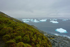 Researchers in Antarctica have discovered rapidly growing banks of mosses. Photo / Matt Amesbury via Washington Post