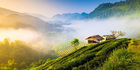Beautiful sunshine at Misty Morning Mountains at North Thailand. Photo / Getty Images