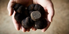 Truffles found at The Truffle & Wine Company, Manjimup, WA. Photo / Tourism Western Australia