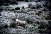 Frosts were felt across the North Island this morning. Picture / Michael Craig