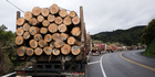 The forest sector is pinning its hopes on more trade training for its logging truck drivers and its machine operators from this year's budget. Picture/NZ Herald.