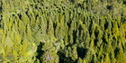 """The Budget """"fails to prepare"""" for the scale of tree-planting needed for New Zealand to meet its Paris Agreement commitments on climate change, a forestry owners group says. Photo / File"""