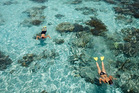 Snorkelling in the crystal clear water of Tropical North Queensland.
