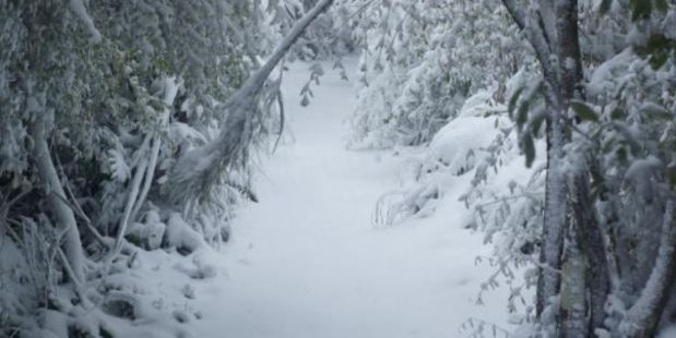 Deep powder snow plastered the Leith Saddle track to Swampy Spur. Photo / Paul Smale, via ODT