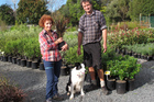 Kerikeri Plant Production owners Julia Colgan and Tom Lindesay, with Xena the border collie, are back in business almost four weeks after NZ's first case of myrtle rust. PHOTO / PETER DE GRAAF