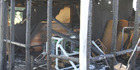 All that remains after a fire gutted a shed in which playing gear were kept at the Eastern United Rugby Football Club in Taipa. Photo / Peter Jackson