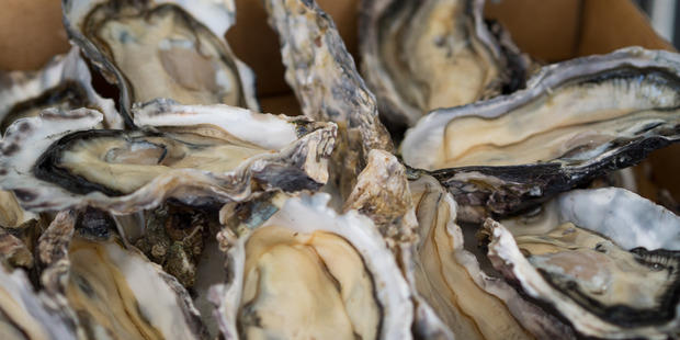 MPI has admitted it's unsure how long it will take to remove the oysters. Photo / File