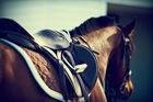 Latest figures show how many people get hurt by horses here each year? Photo / 123RF