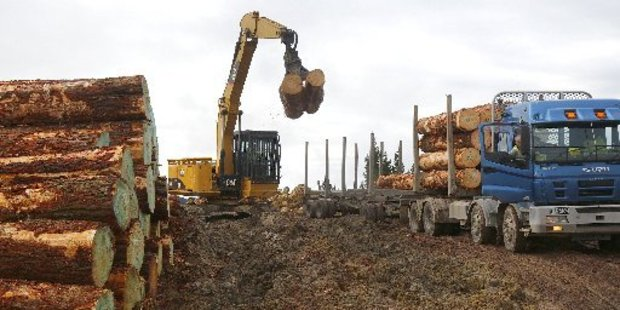 The deep mud fails to halt the truck and trailer loads extracted from the Maxwell forest each day.