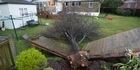 Watch: Tree through a fence in Hillcrest