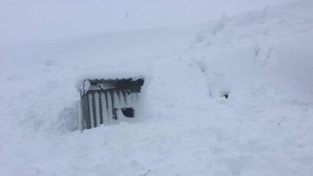 Believe it or not, this is a dog kennel. Photo / James Rogers